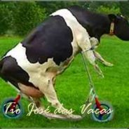 Tio José das Vacas